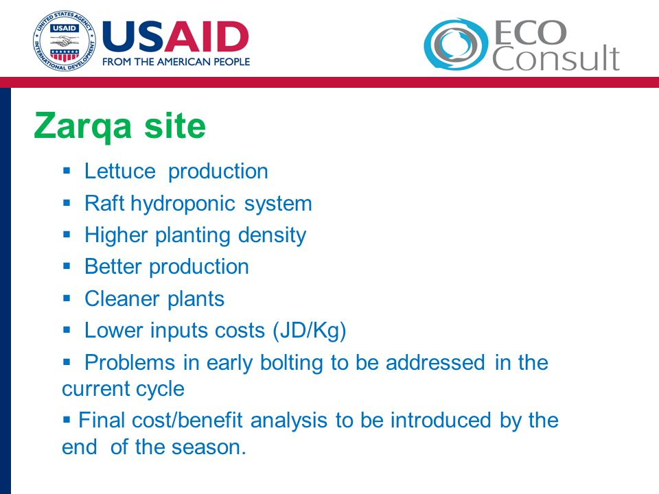 Zarqa site  Lettuce production  Raft hydroponic system  Higher planting density  Better production  Cleaner plants  Lower inputs costs (JD/Kg)  Problems in early bolting to be addressed in the current cycle  Final cost/benefit analysis to be introduced by the end of the season.