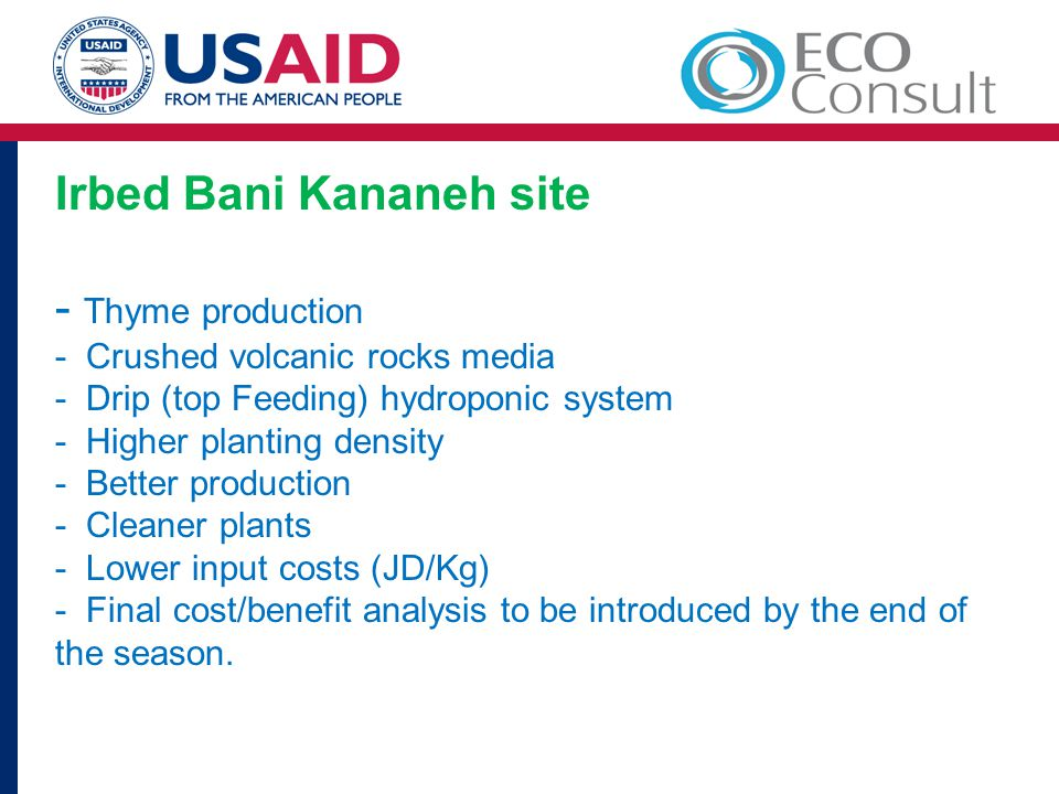 Irbed Bani Kananeh site - Thyme production - Crushed volcanic rocks media - Drip (top Feeding) hydroponic system - Higher planting density - Better pr