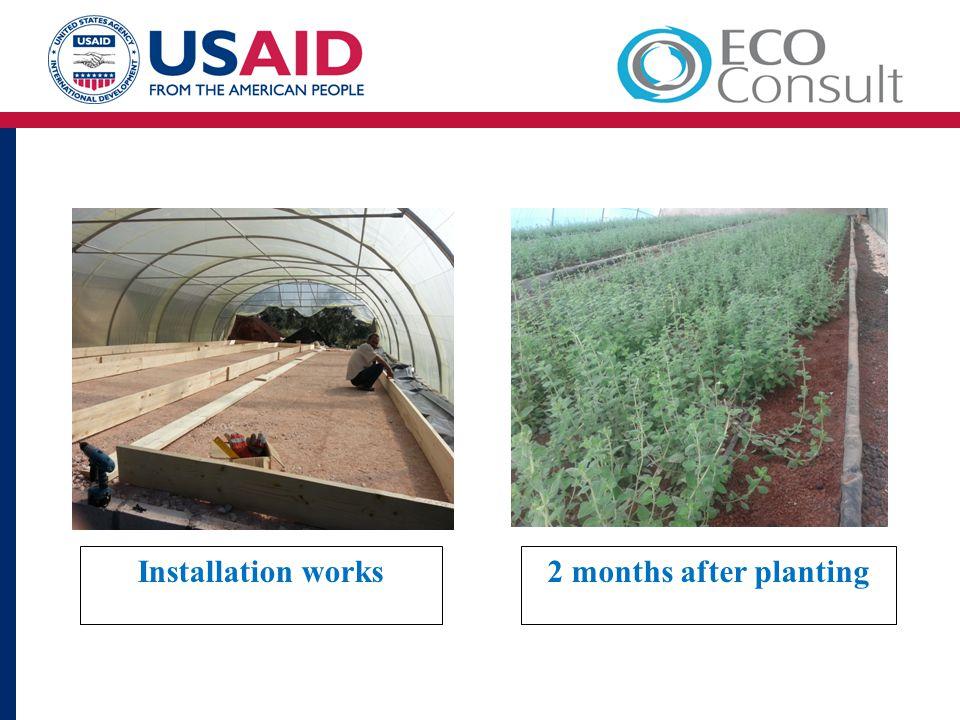 Installation works2 months after planting