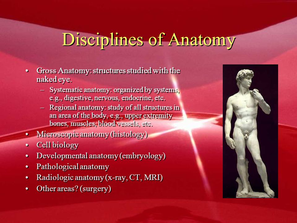 Disciplines of Anatomy Gross Anatomy: structures studied with the naked eye. –Systematic anatomy: organized by systems, e.g., digestive, nervous, endo