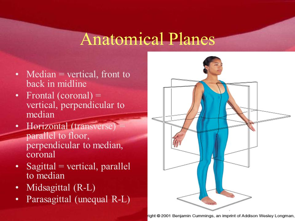 Reference positions Anatomical position –most widely used & accurate for all aspects of the body –standing in an upright posture, facing straight ahead, feet parallel and close, & palms facing forward Fundamental position –is essentially same as anatomical position except arms are at the sides & palms facing the body Anatomical position –most widely used & accurate for all aspects of the body –standing in an upright posture, facing straight ahead, feet parallel and close, & palms facing forward Fundamental position –is essentially same as anatomical position except arms are at the sides & palms facing the body