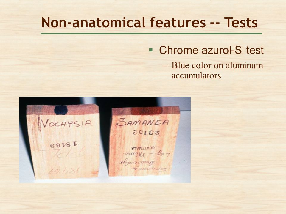 Non-anatomical features -- Tests  Chrome azurol-S test Chrome azurol-S test –Blue color on aluminum accumulatorsBlue color on aluminum accumulators