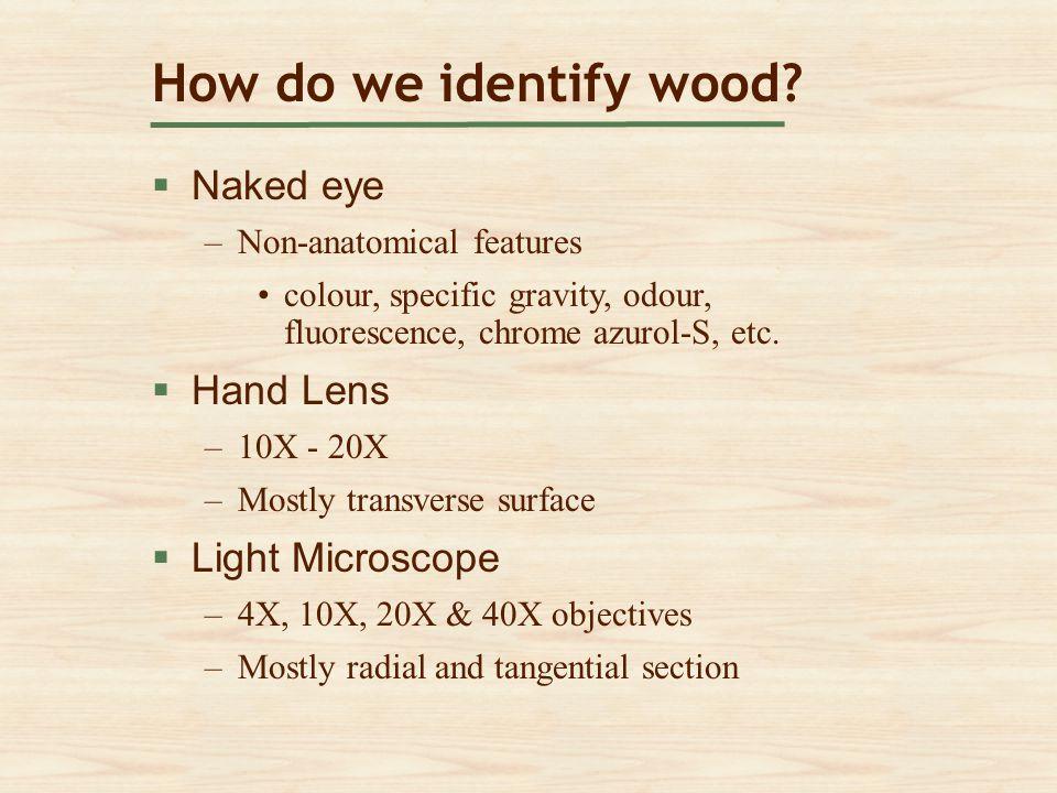 How do we identify wood?  Naked eye Naked eye –Non-anatomical featuresNon-anatomical features colour, specific gravity, odour, fluorescence, chrome a