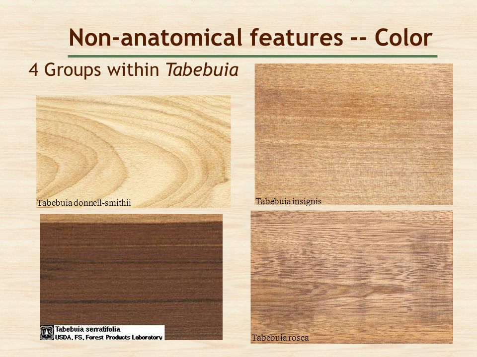 Non-anatomical features -- Color 4 Groups within Tabebuia Tabebuia donnell-smithii Tabebuia rosea Tabebuia insignis