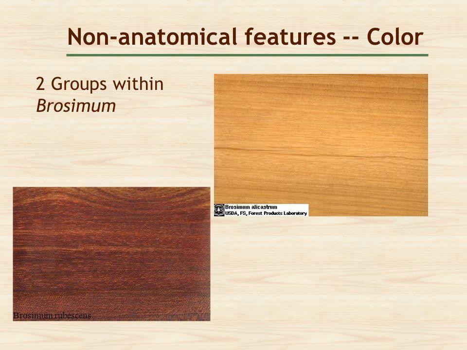 Non-anatomical features -- Color 2 Groups within Brosimum Brosimum rubescens