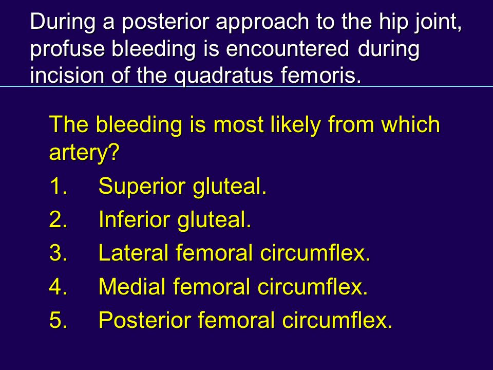 During a posterior approach to the hip joint, profuse bleeding is encountered during incision of the quadratus femoris. The bleeding is most likely fr