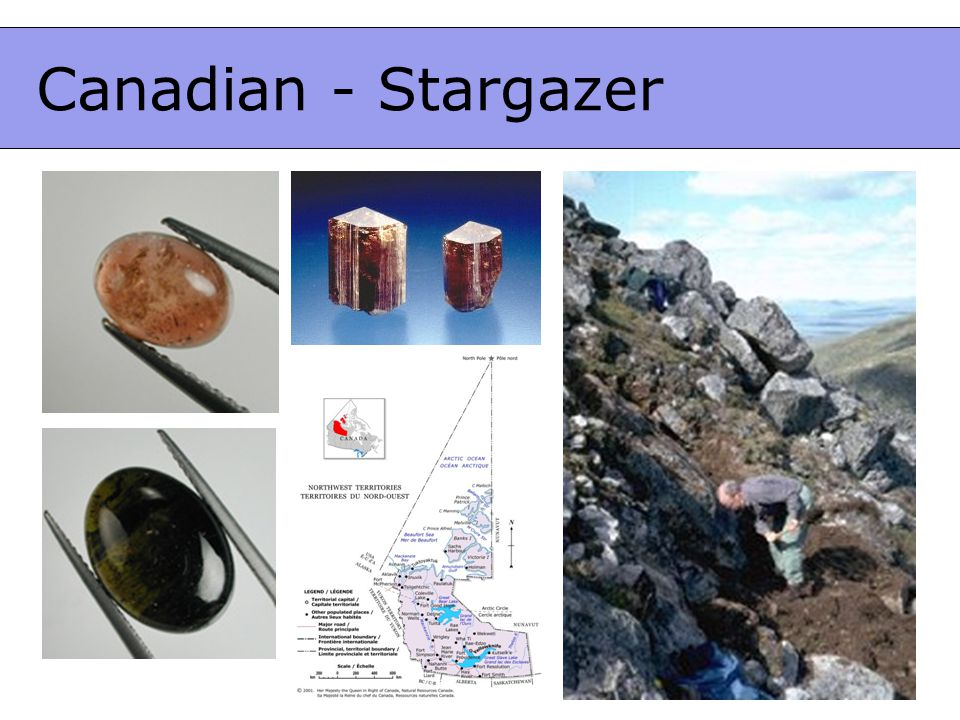 Canadian - Stargazer