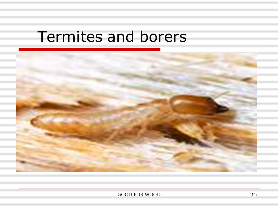 GOOD FOR WOOD15 Termites and borers