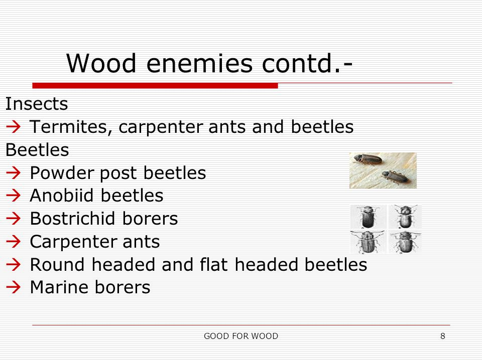 GOOD FOR WOOD8 Wood enemies contd.- Insects  Termites, carpenter ants and beetles Beetles  Powder post beetles  Anobiid beetles  Bostrichid borers  Carpenter ants  Round headed and flat headed beetles  Marine borers