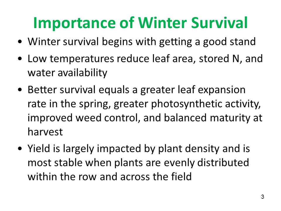 Importance of Winter Survival Winter survival begins with getting a good stand Low temperatures reduce leaf area, stored N, and water availability Better survival equals a greater leaf expansion rate in the spring, greater photosynthetic activity, improved weed control, and balanced maturity at harvest Yield is largely impacted by plant density and is most stable when plants are evenly distributed within the row and across the field 3
