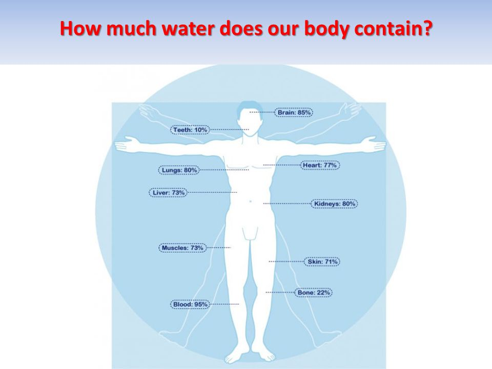 How much water does our body contain?