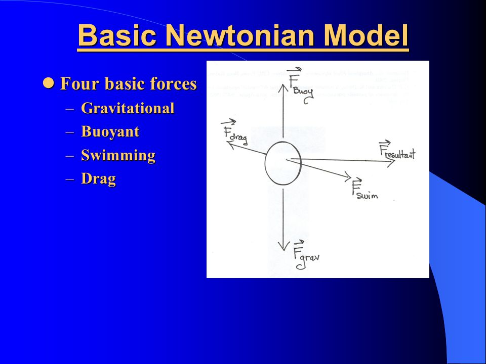 Basic Newtonian Model Four basic forces Four basic forces –Gravitational –Buoyant –Swimming –Drag
