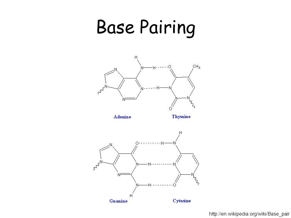 Base Pairing http://en.wikipedia.org/wiki/Base_pair