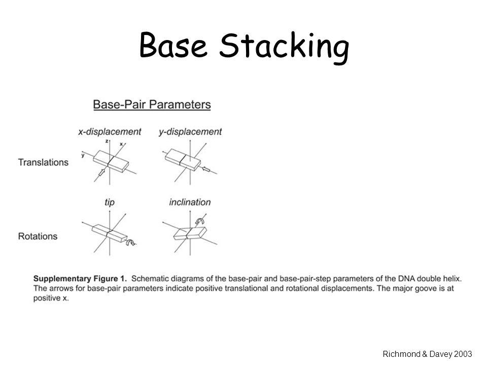 Base Stacking Richmond & Davey 2003