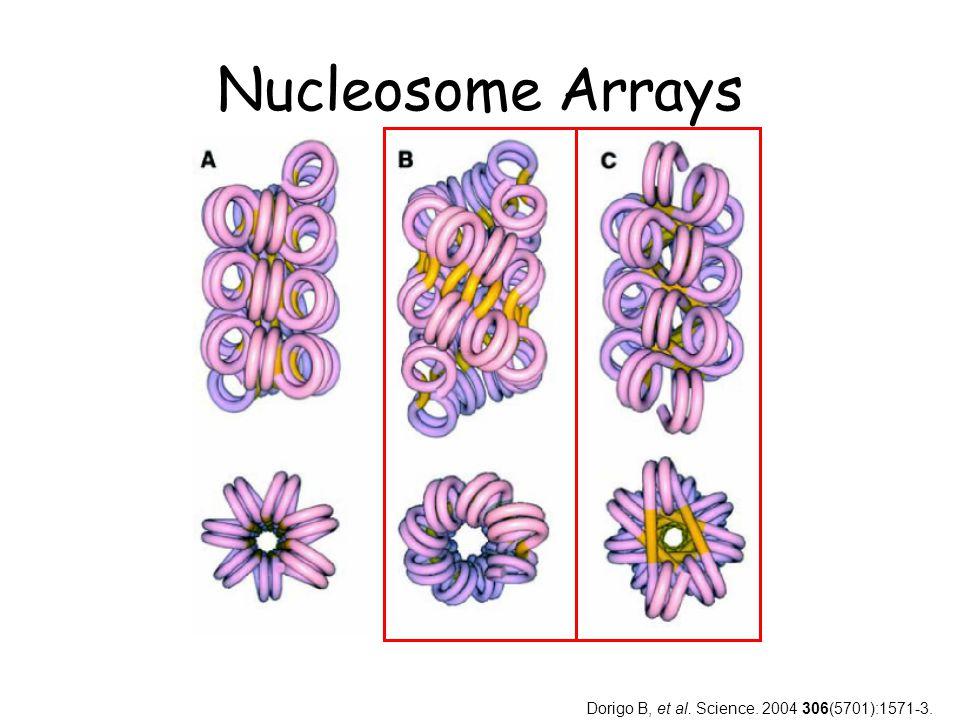Nucleosome Arrays Dorigo B, et al. Science. 2004 306(5701):1571-3.