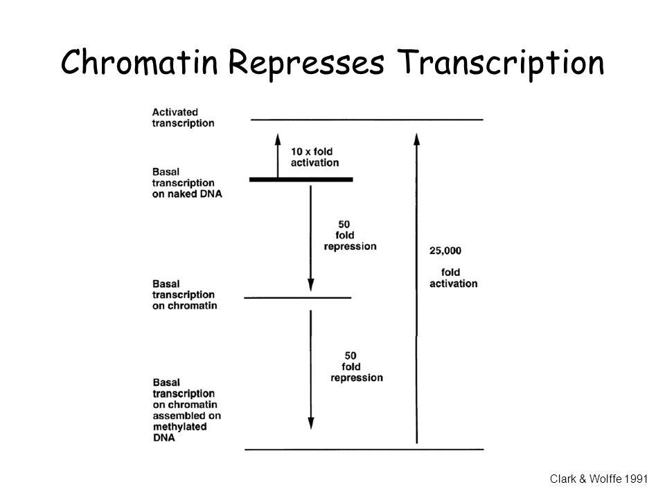 Chromatin Represses Transcription Clark & Wolffe 1991