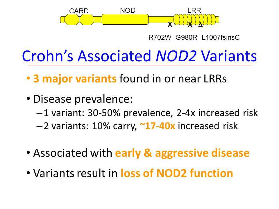 Crohn's Associated NOD2 Variants 3 major variants found in or near LRRs Disease prevalence: – 1 variant: 30-50% prevalence, 2-4x increased risk – 2 variants: 10% carry, ~17-40x increased risk Associated with early & aggressive disease Variants result in loss of NOD2 function 12822027357774410401020 CARD NODLRR X X  R702W G980R L1007fsinsC