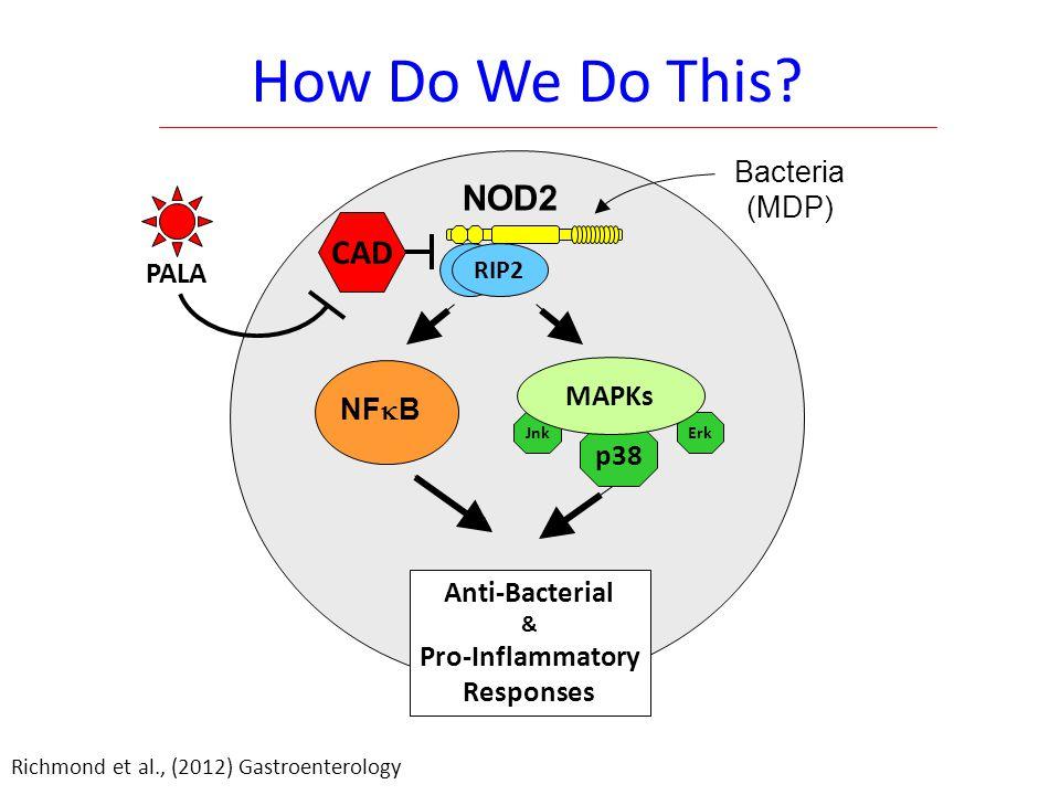 PALA Enhances NOD2 Bacterial Killing Mouse Bone Marrow-Derived Macrophages
