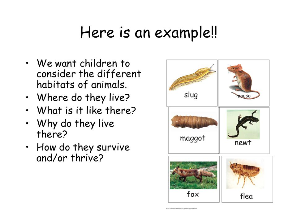 Here is an example!.We want children to consider the different habitats of animals.