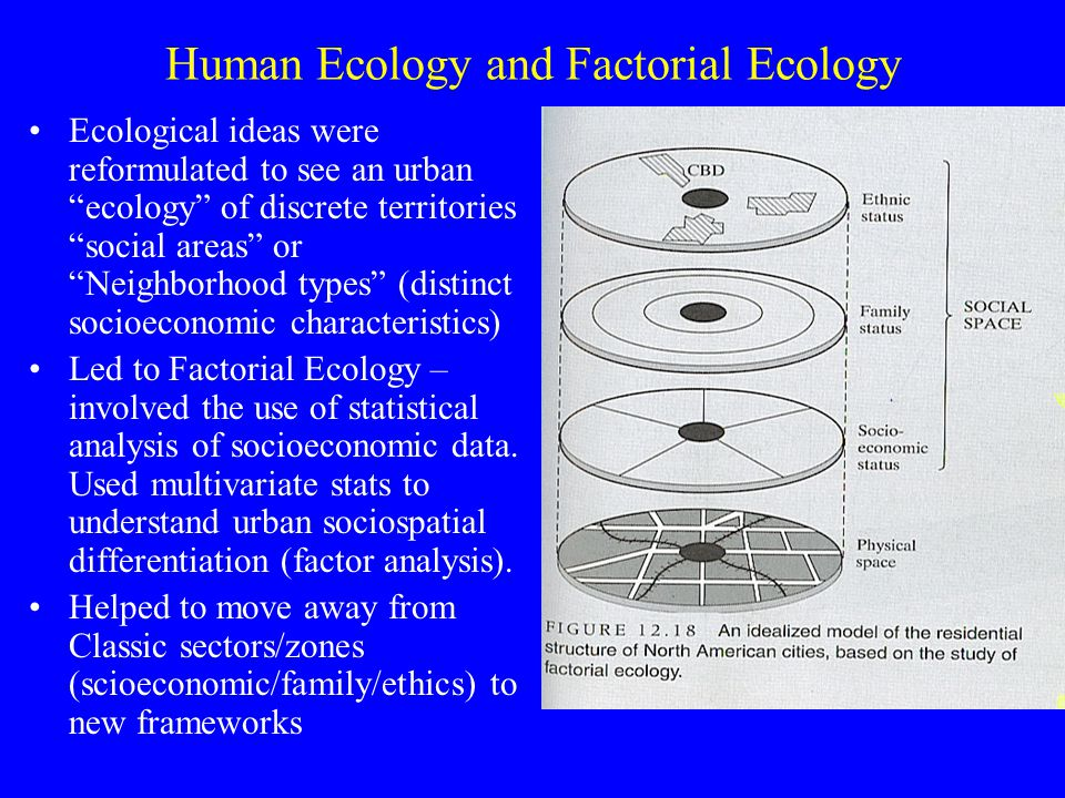 Human Ecology and Factorial Ecology Ecological ideas were reformulated to see an urban ecology of discrete territories social areas or Neighborhood types (distinct socioeconomic characteristics) Led to Factorial Ecology – involved the use of statistical analysis of socioeconomic data.