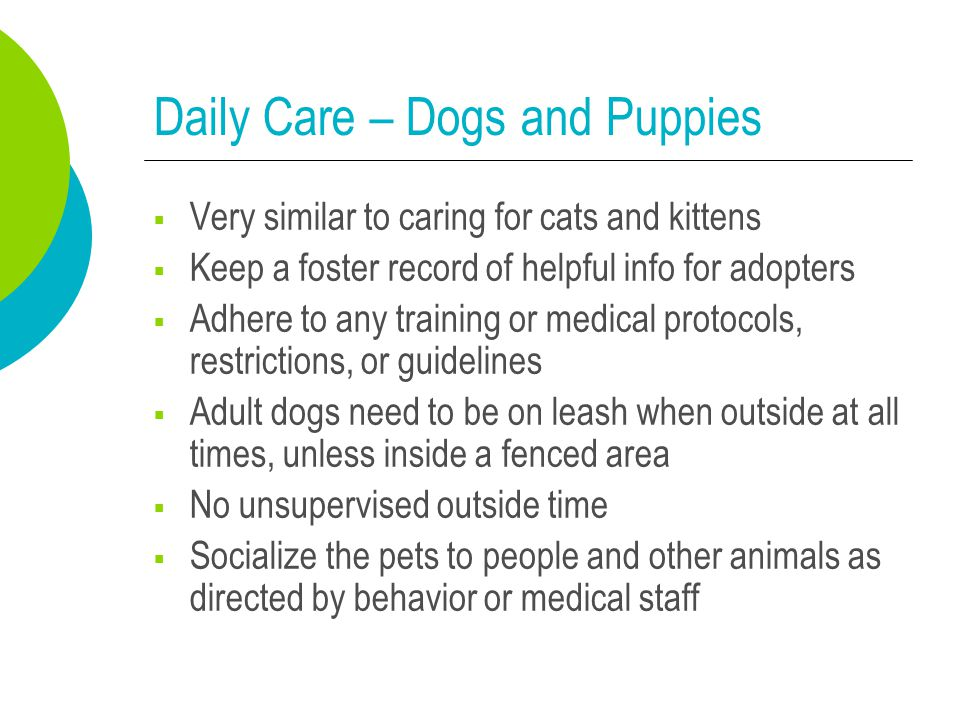 Daily Care – Dogs and Puppies  Very similar to caring for cats and kittens  Keep a foster record of helpful info for adopters  Adhere to any traini