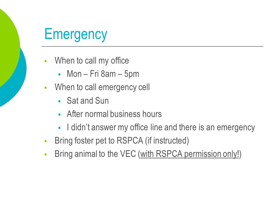 Emergency  When to call my office  Mon – Fri 8am – 5pm  When to call emergency cell  Sat and Sun  After normal business hours  I didn't answer my office line and there is an emergency  Bring foster pet to RSPCA (if instructed)  Bring animal to the VEC (with RSPCA permission only!)