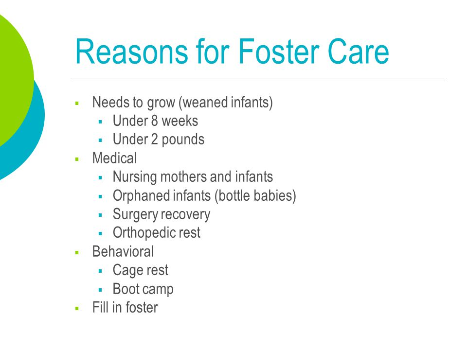 Reasons for Foster Care  Needs to grow (weaned infants)  Under 8 weeks  Under 2 pounds  Medical  Nursing mothers and infants  Orphaned infants (bottle babies)  Surgery recovery  Orthopedic rest  Behavioral  Cage rest  Boot camp  Fill in foster