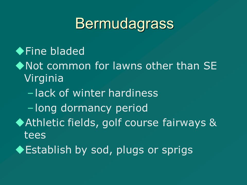 Bermudagrass   Fine bladed   Not common for lawns other than SE Virginia – –lack of winter hardiness – –long dormancy period   Athletic fields, golf course fairways & tees   Establish by sod, plugs or sprigs