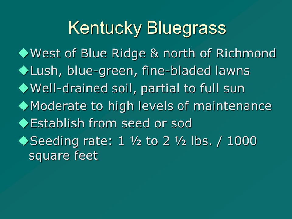 Kentucky Bluegrass  West of Blue Ridge & north of Richmond  Lush, blue-green, fine-bladed lawns  Well-drained soil, partial to full sun  Moderate to high levels of maintenance  Establish from seed or sod  Seeding rate: 1 ½ to 2 ½ lbs.