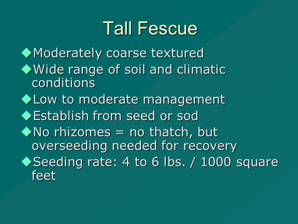 Tall Fescue  Moderately coarse textured  Wide range of soil and climatic conditions  Low to moderate management  Establish from seed or sod  No rhizomes = no thatch, but overseeding needed for recovery  Seeding rate: 4 to 6 lbs.