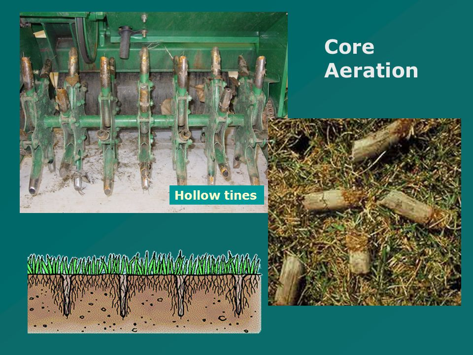 Hollow tines Core Aeration