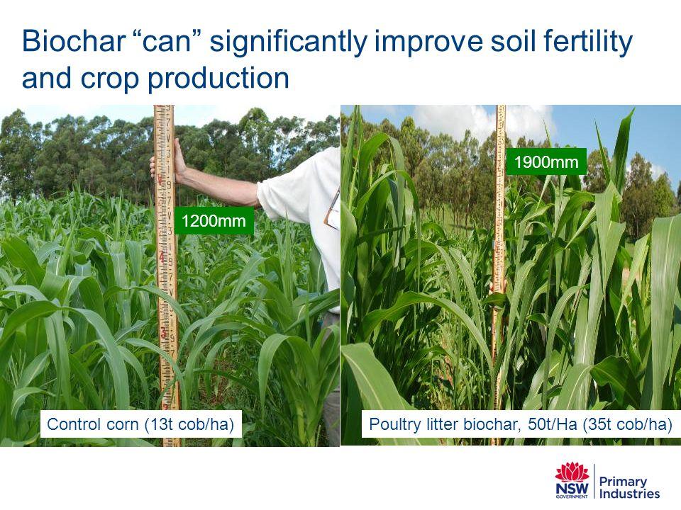 """Control corn (13t cob/ha) 1200mm 1900mm Poultry litter biochar, 50t/Ha (35t cob/ha) Biochar """"can"""" significantly improve soil fertility and crop produc"""