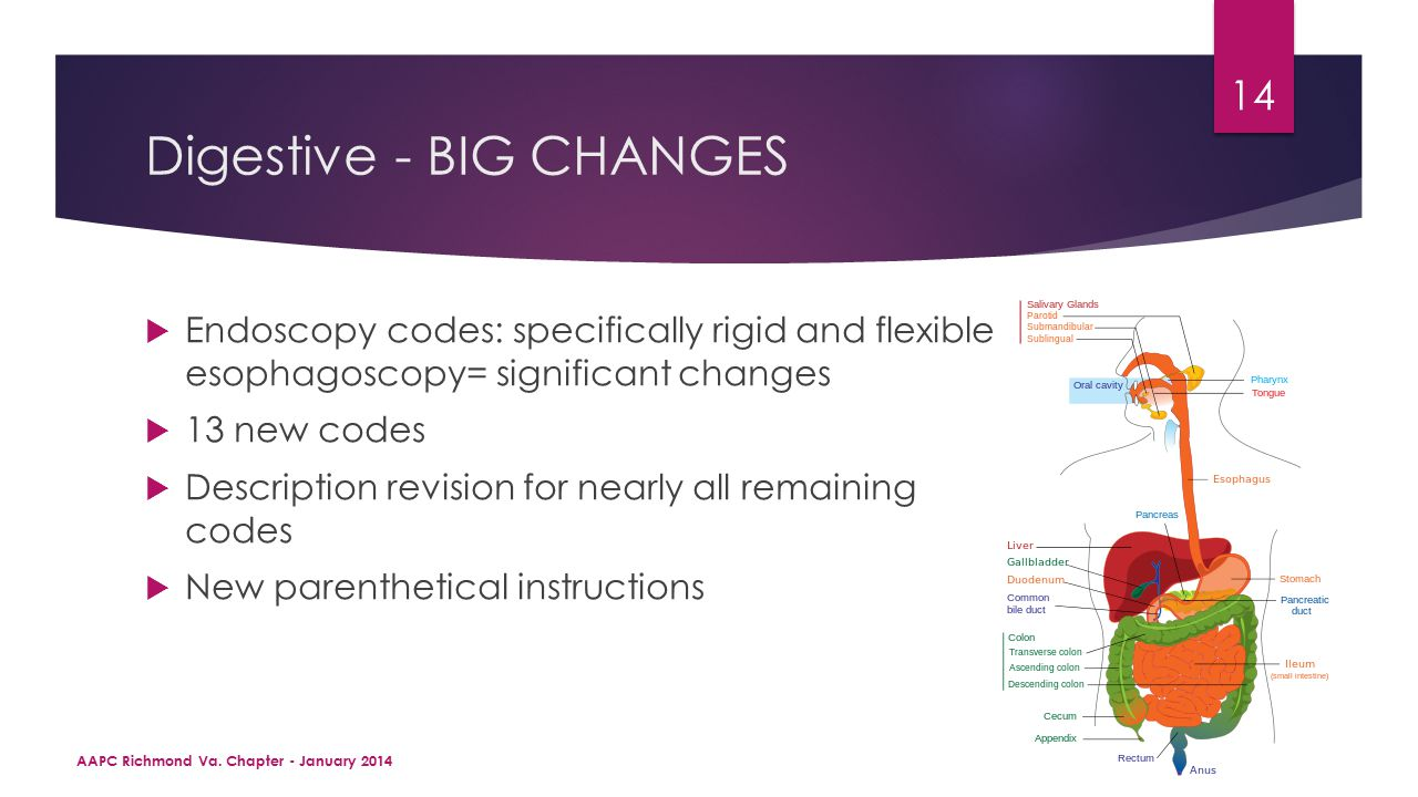Digestive - BIG CHANGES  Endoscopy codes: specifically rigid and flexible esophagoscopy= significant changes  13 new codes  Description revision for nearly all remaining codes  New parenthetical instructions AAPC Richmond Va.