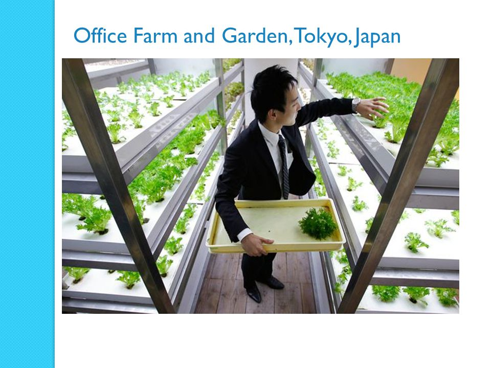 Office Farm and Garden, Tokyo, Japan