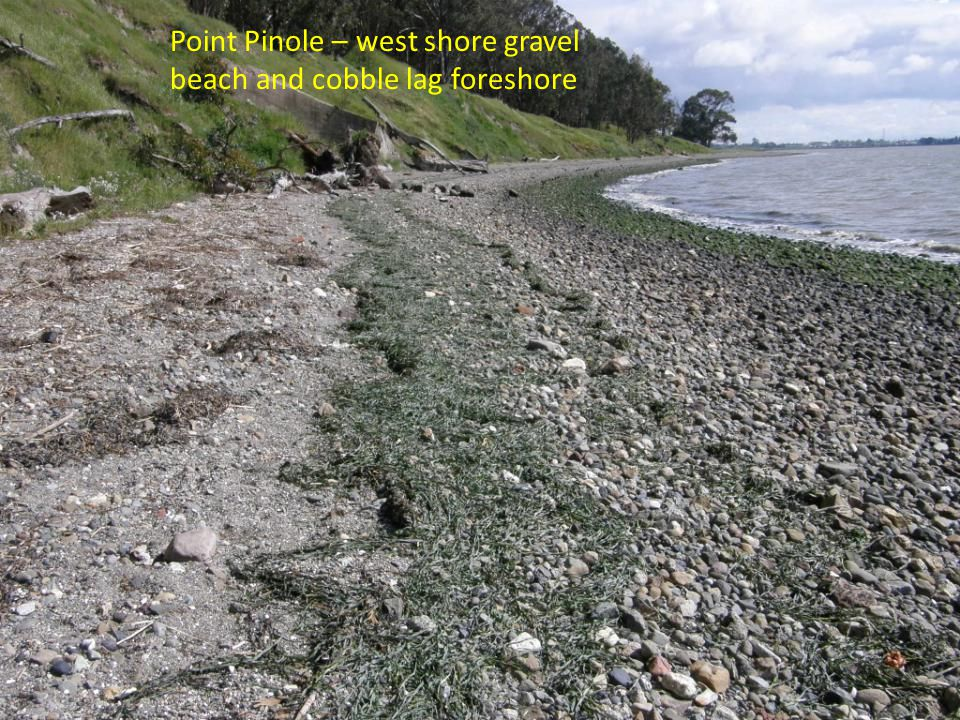 Point Pinole – west shore gravel beach and cobble lag foreshore