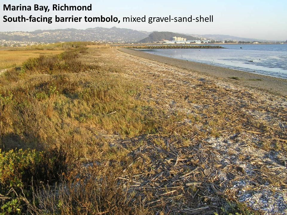 Marina Bay, Richmond South-facing barrier tombolo, mixed gravel-sand-shell