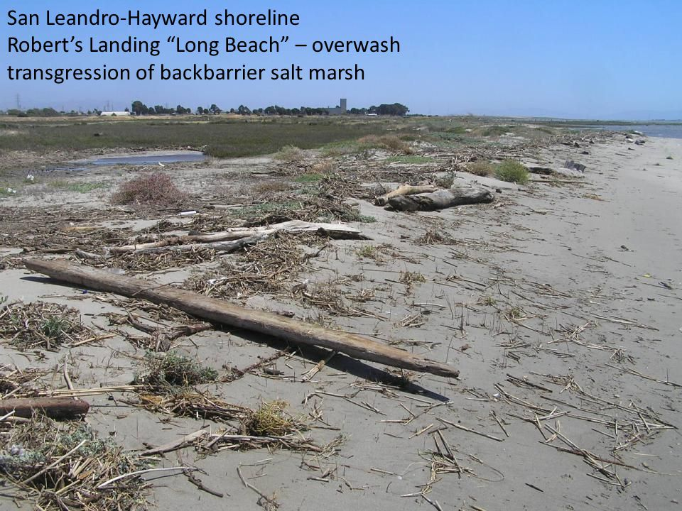 San Leandro-Hayward shoreline Robert's Landing Long Beach – overwash transgression of backbarrier salt marsh