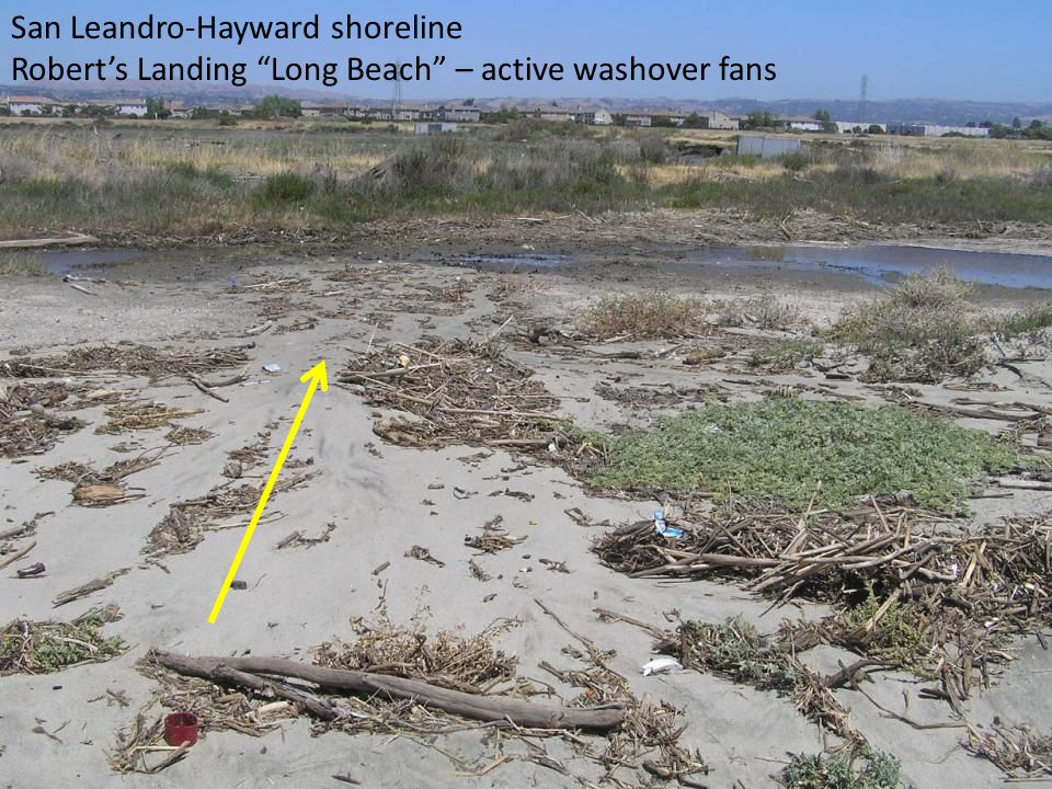 San Leandro-Hayward shoreline Robert's Landing Long Beach – active washover fans