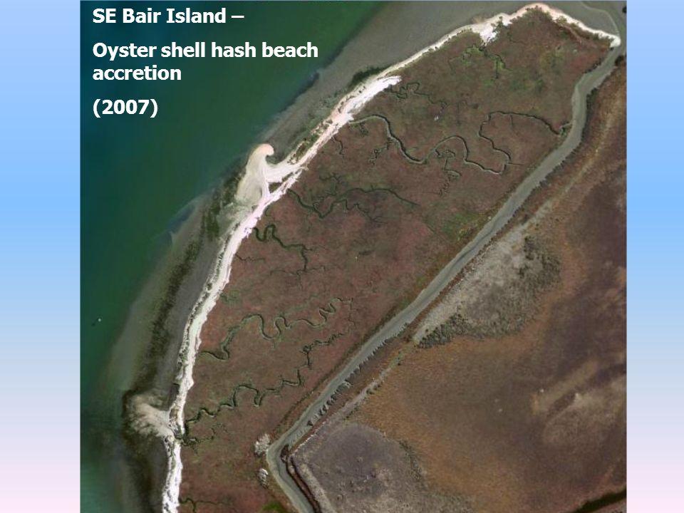 SE Bair Island – Oyster shell hash beach accretion (2007)