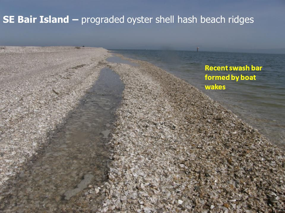 Recent swash bar formed by boat wakes