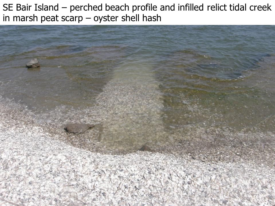 SE Bair Island – perched beach profile and infilled relict tidal creek in marsh peat scarp – oyster shell hash
