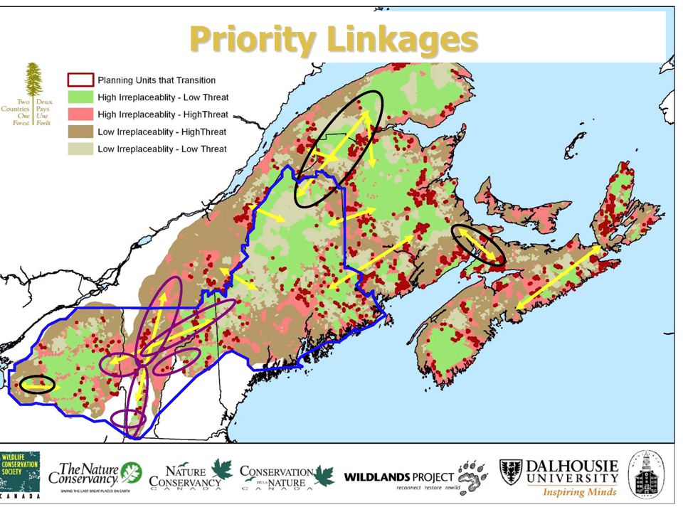 Priority Linkages