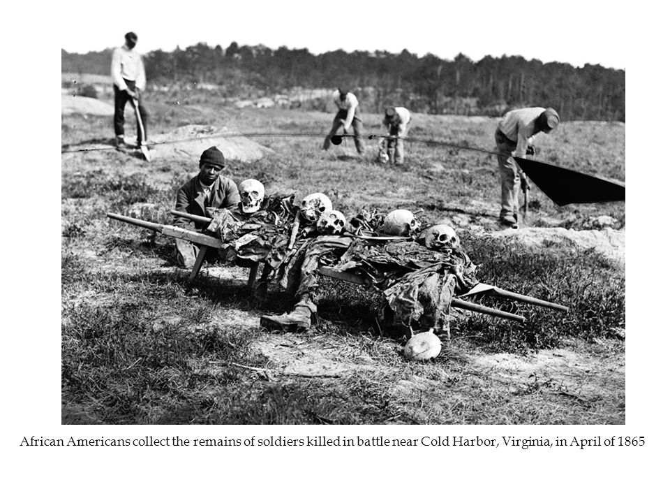 African Americans collect the remains of soldiers killed in battle near Cold Harbor, Virginia, in April of 1865