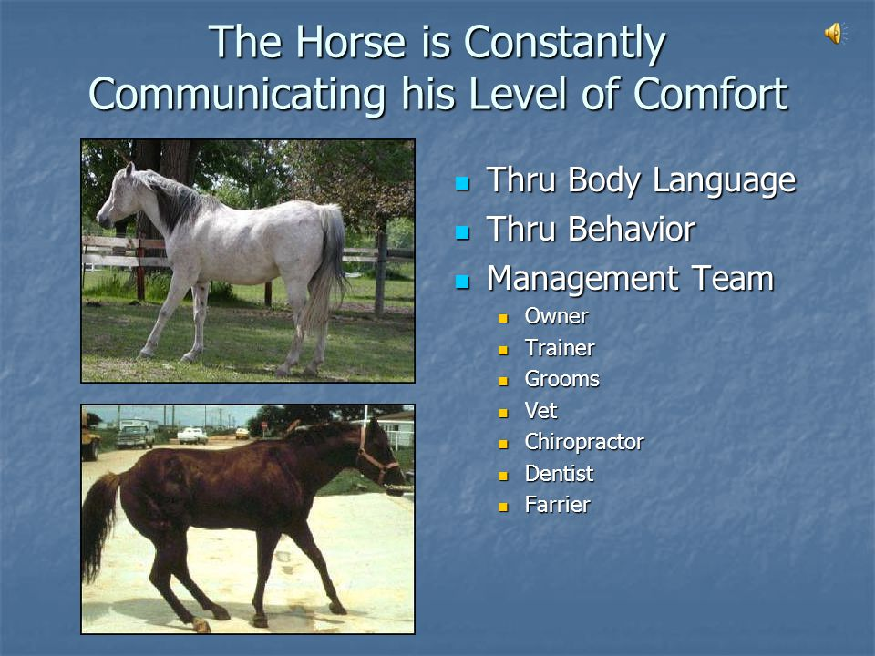 What is The Subject of the Communication from the Horse to the Driver.