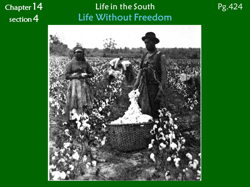 Life in the South Life Without Freedom Chapter 14 section 4 Pg.424
