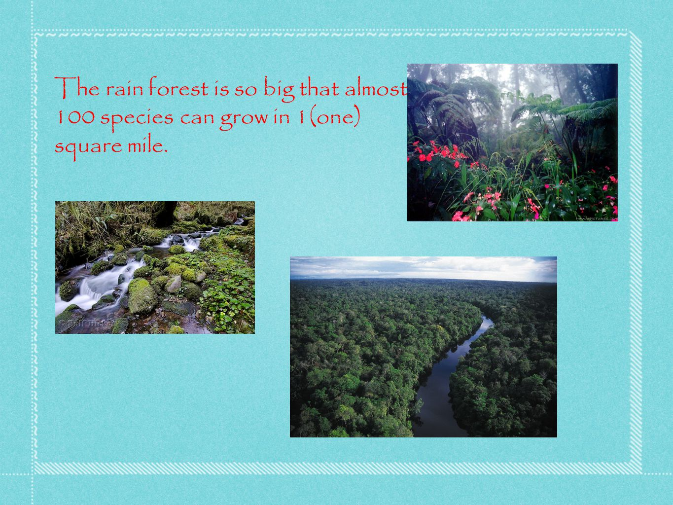 The rain forest is so big that almost 100 species can grow in 1(one) square mile.