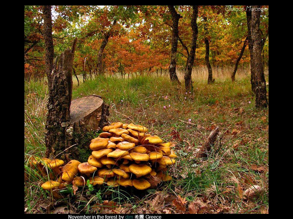 November in the forest by dim 希臘 Greecedim
