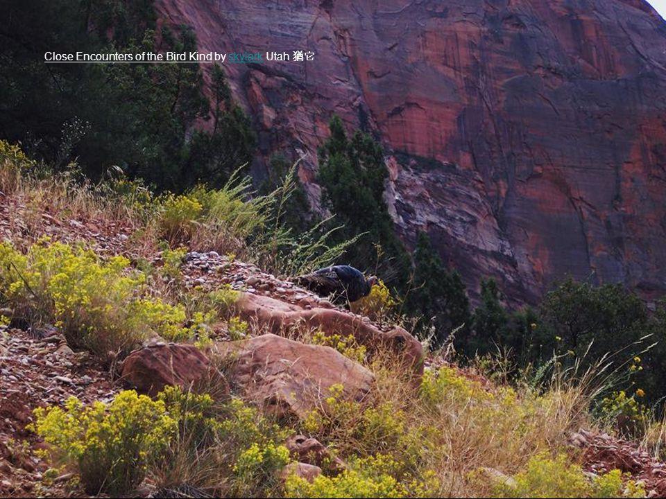 Close Encounters of the Bird Kind by skylark Utah 猶它skylark