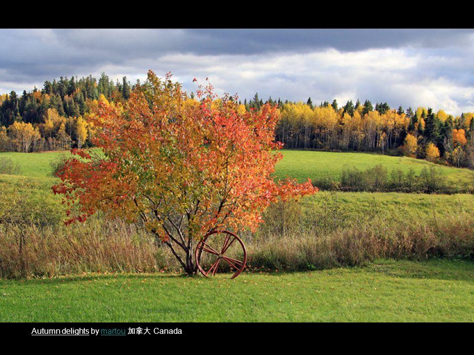 Autumn delights by martou 加拿大 Canadamartou