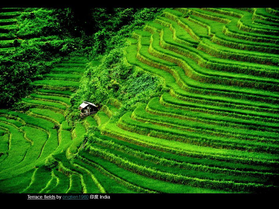 Terrace fields by ongtien1960 印度 Indiaongtien1960